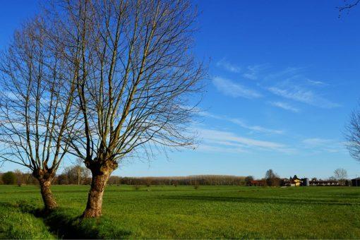 Campagna. Paesaggio di alberi, coltivi, acqua e villaggi.